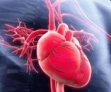 Удивительные факты о сердце и системе кровообращения